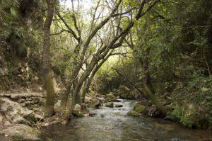 22052012_GL_Isabel Torres_El Bosque_Cádiz_Hábitat río Majaceite de Lampyris iberica_5