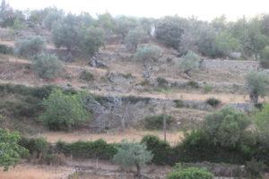 120615_063_GL_José Ramón Guzmán Álvarez_Puigpunyent_Mallorca_Terrazas con olivos e higueras.jpg