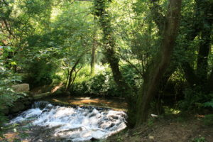 150614_033_GL_José Ramón Guzmán Álvarez_Vilanova de Gaia_Parque Biológico_Portugal_Hábitat de Lamprohiza